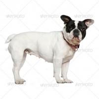 dog2-200x200 (1)