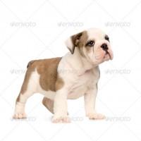 dog4-200x200
