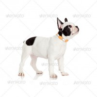 dog5-200x200
